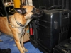 Explosives Detection K9