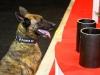 Bomb Sniffing Dog at OTC