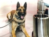 Narcotics Detection K9 Units in Houston