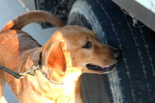 Canine Detection Services offers explosive detection services